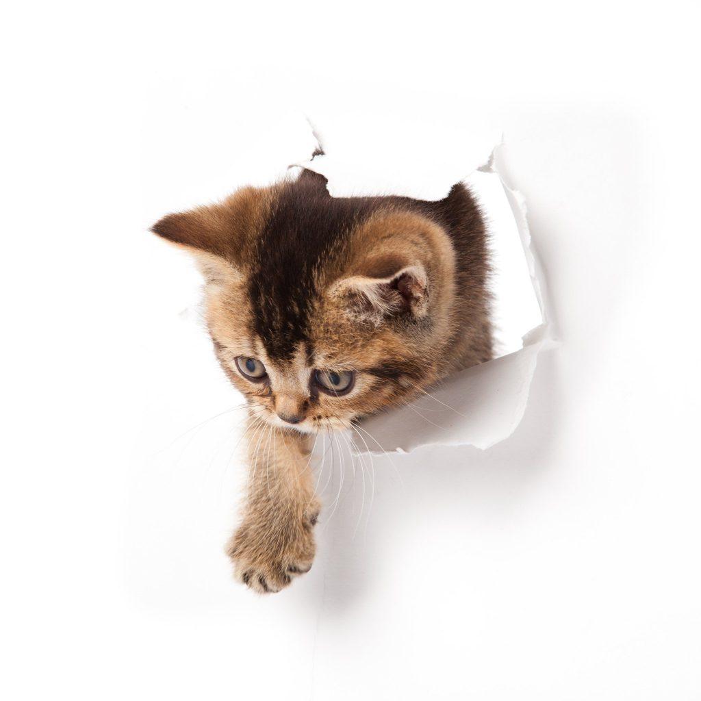 gato dr vet iquique